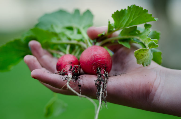 The Good Food Box Network by Environment Hamilton | The Inlet Online Arts and Culture Blog | Hamilton, Ontario Photo 3