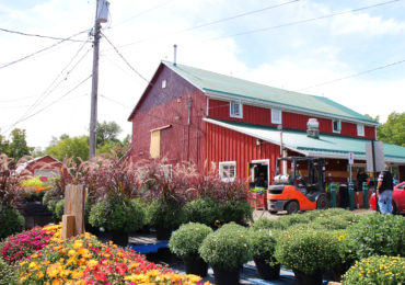 Bennett's Apples & Cider | Hamilton, Ontario | The Inlet Photo 3