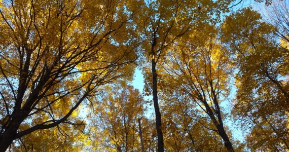 Fall Colours | Hamilton, Ontario | Leaves