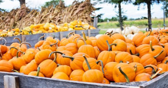 Halloween events | The Inlet News Events