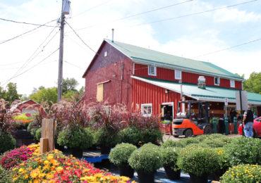 Bennett's Apples & Cider | Hamilton, Ontario | The Inlet Photo 3